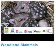 Woodland mammals video