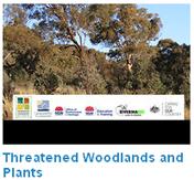 Woodland plants video